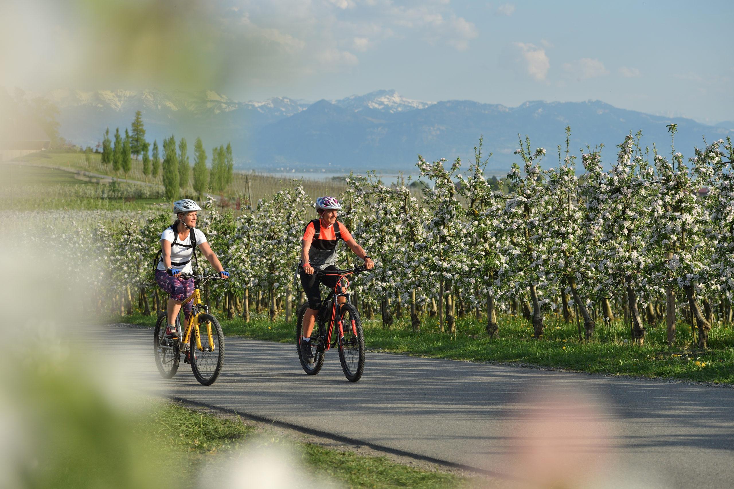 Radfahren Fruhling